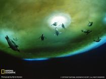 penguins-underwater