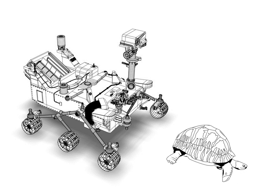 tortuga vs rover